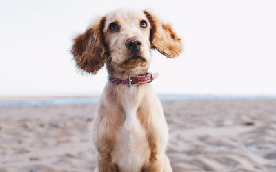 Is It Ever Too Late to Start Training a Dog?