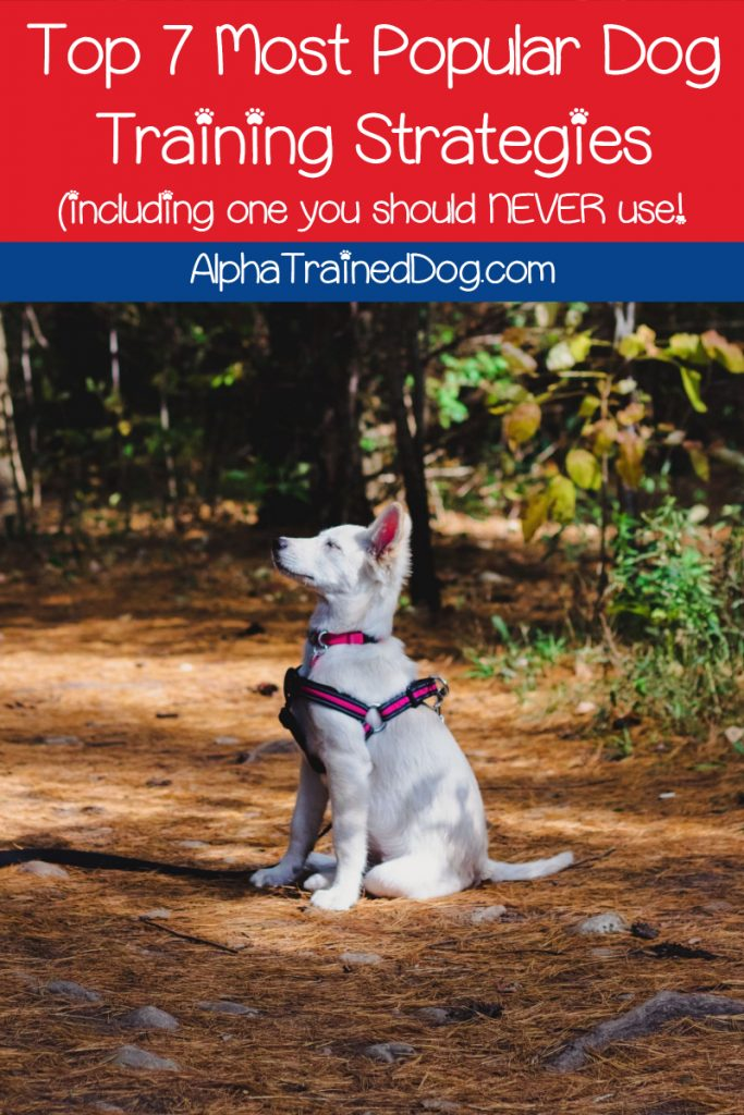 Did you know that there are many different types of dog training strategies? Read on to learn the most popular, including one you should never use!