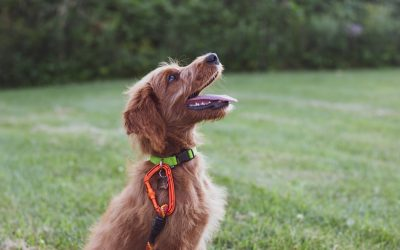 Top 7 Most Popular Dog Training Strategies (Including One You Should NEVER Use!)