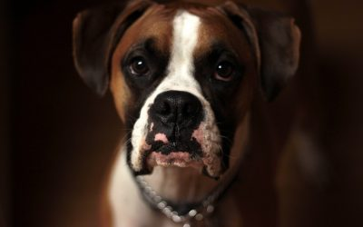 Are Ultrasonic Anti-barking Devices Worth Trying?