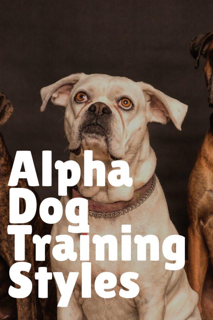 Alpha Dog Training Styles