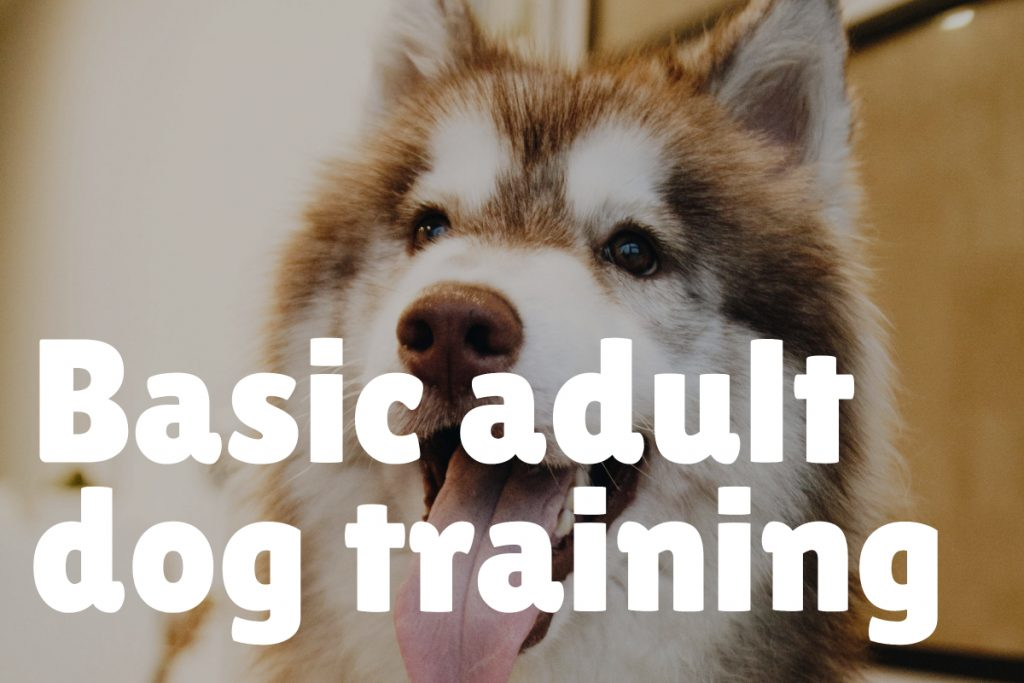 2. Basic Adult Dog Training