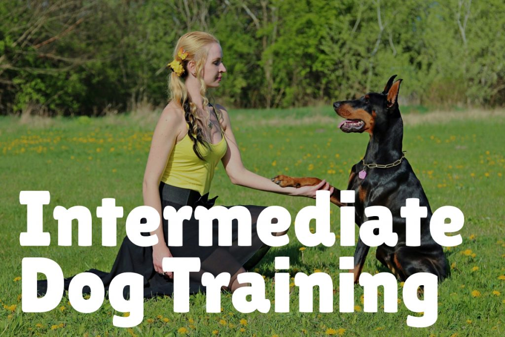 3. Intermediate Dog Training