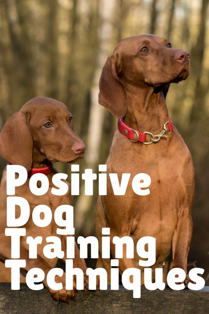 Positive Dog Training Techniques