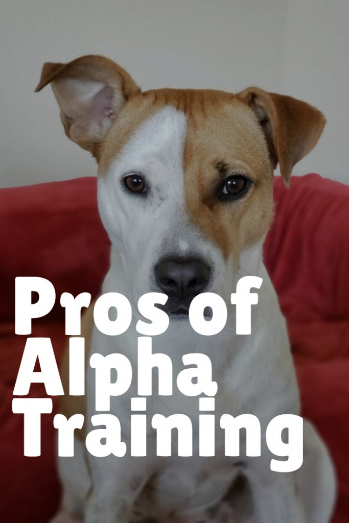 Pros of Alpha Dog Training