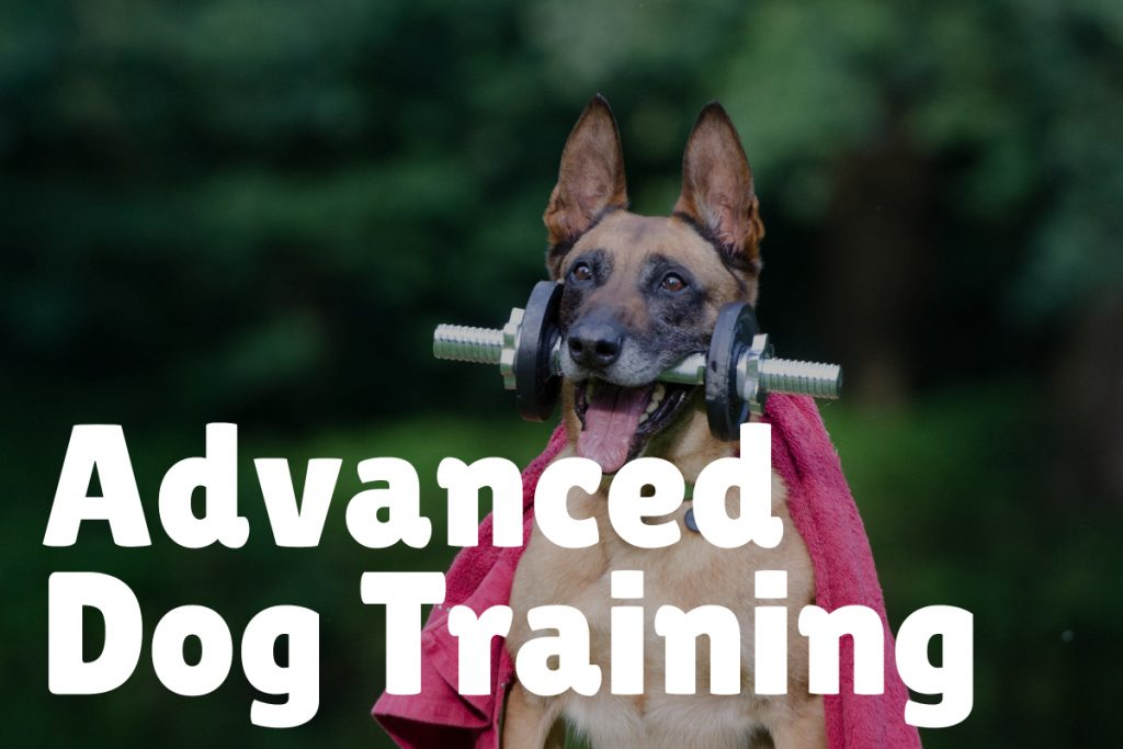 4. Advanced Training