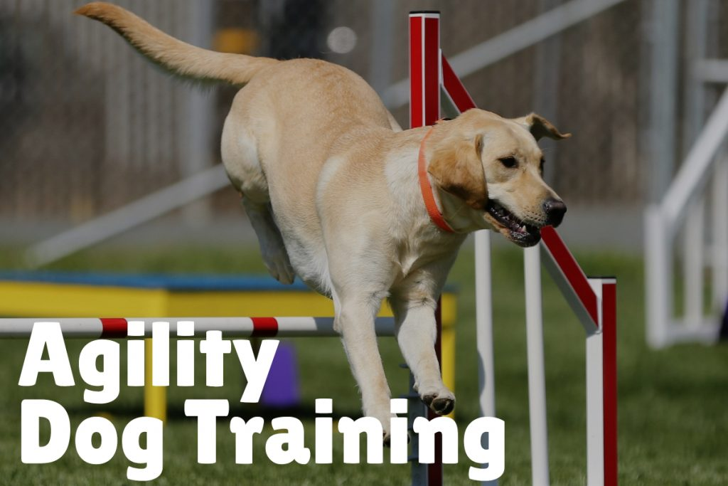 7.  Agility Dog Training