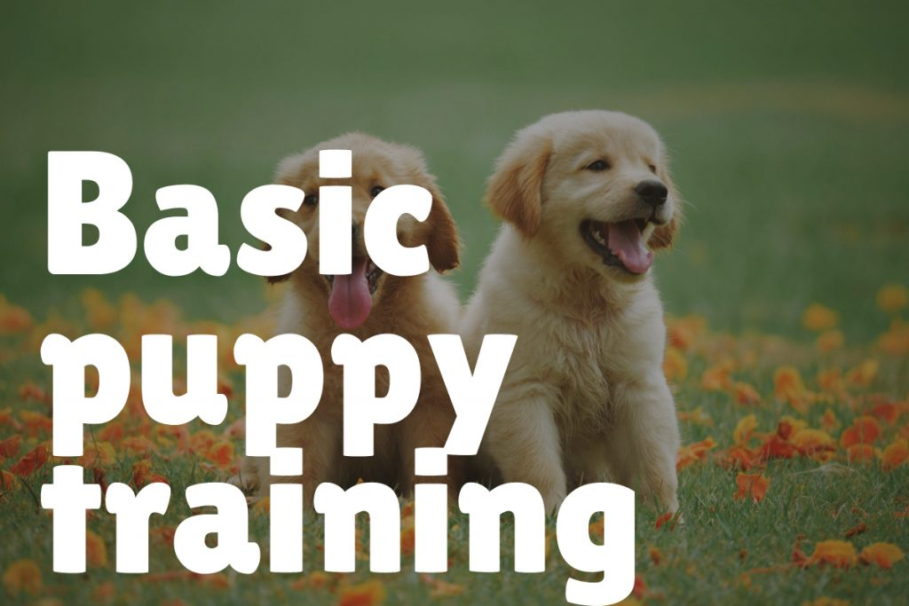 1. Basic Puppy Training