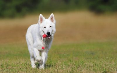 Top 10 Best Dog Training Tools to Keep on Hand
