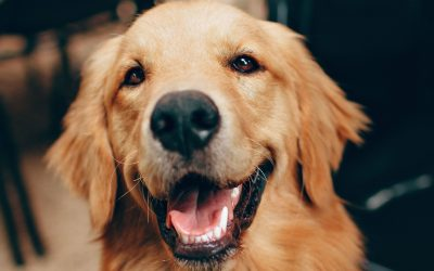 Dog Training Classes: What Should You Know to Choose the Right One?