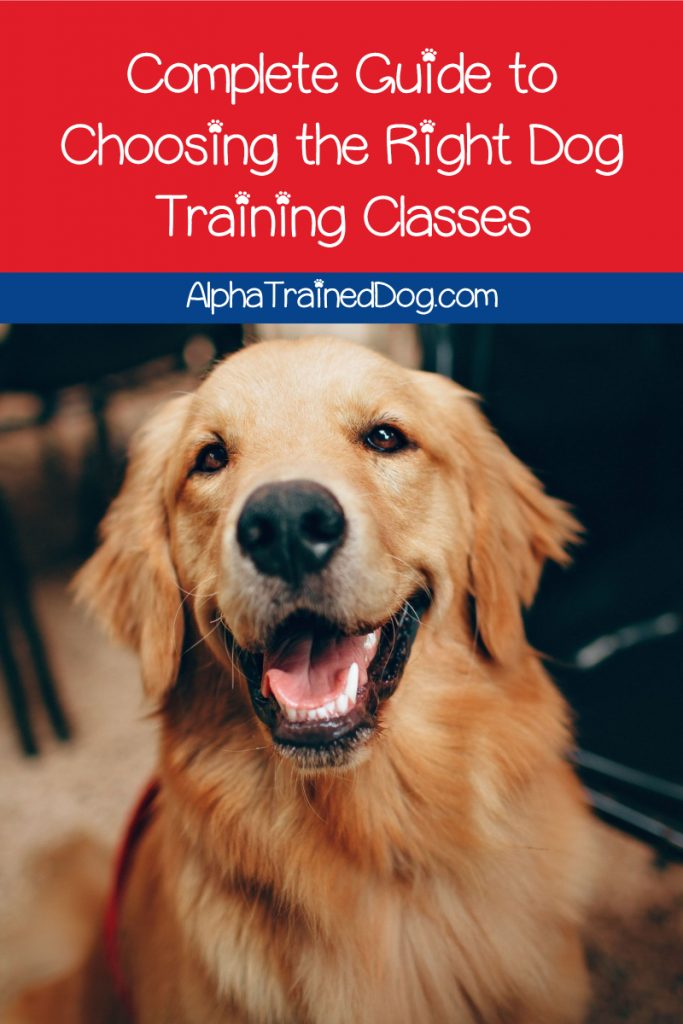 Need some help choosing the best dog training classes? Read on for our complete guide to the different types of classes and how to pick the best trainer!