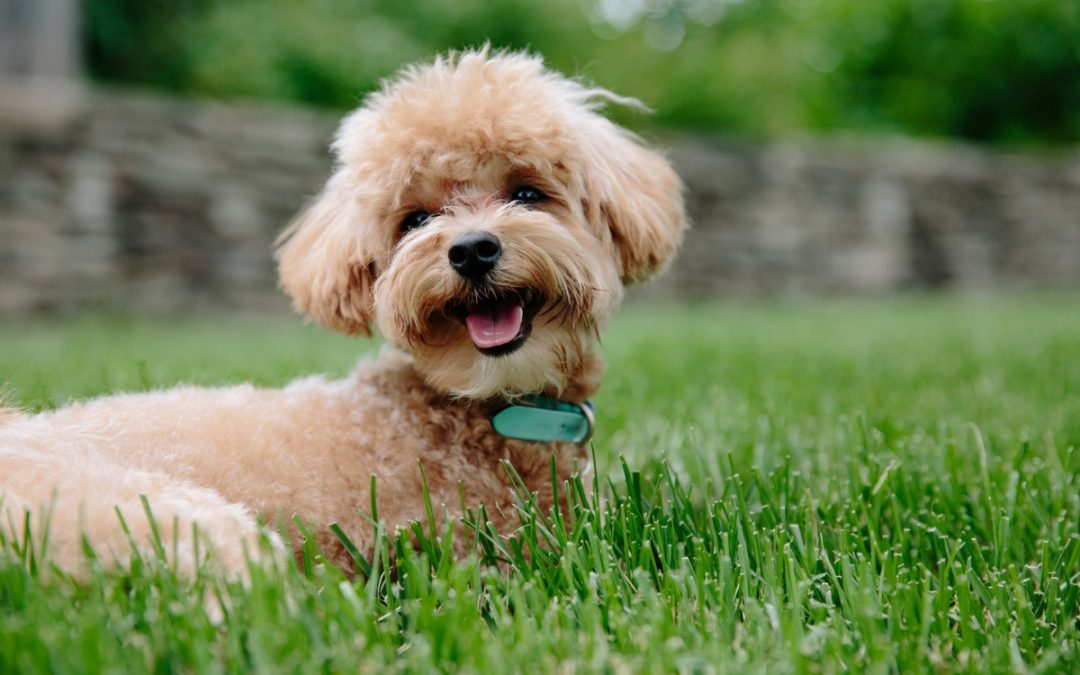 Can a Dog Be Trained to Go Potty Both Outdoors and Indoors?