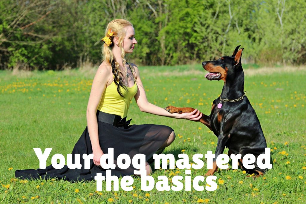 Your dog mastered the basics but is having a hard time with advanced commands