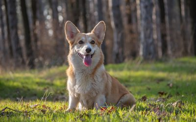 What is Positive Reinforcement Dog Training?