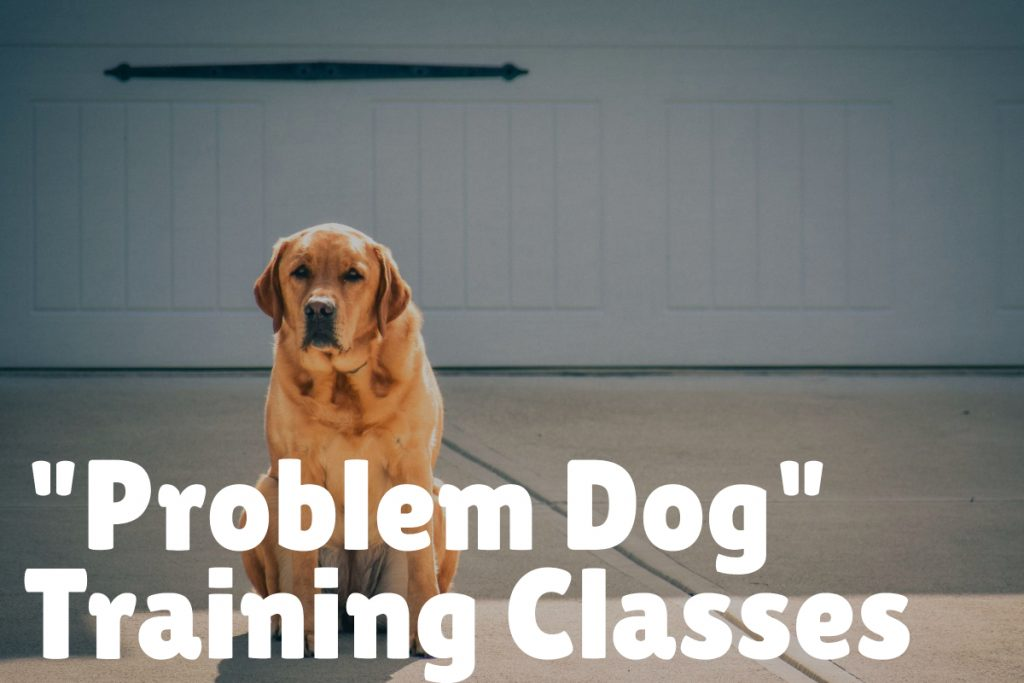 "6. ""Problem Dog"" Training"