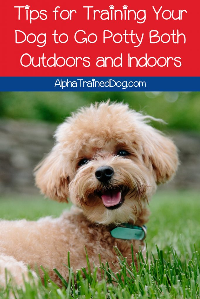 Can a dog be trained to go potty both outdoors and indoors? In theory, yes. Read on to find out how to make it work for your dog!