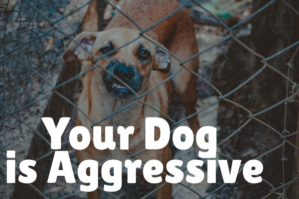 If your dog is aggressive then you definitely need training classes!