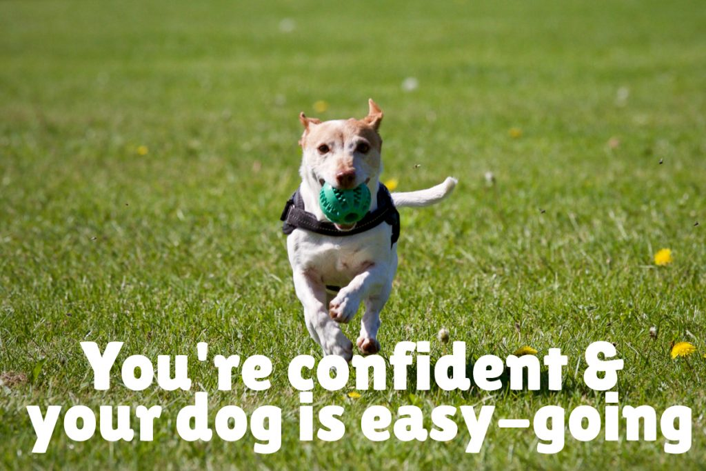 You're confident in your training skills AND your dog is a fairly easy-going pooch