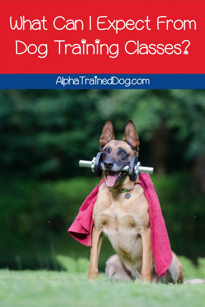 What can I expect from dog training classes? If you're a new puppy parent, you might be wondering the same thing. Read on to find out!