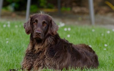What Can I Expect From Dog Training Classes?