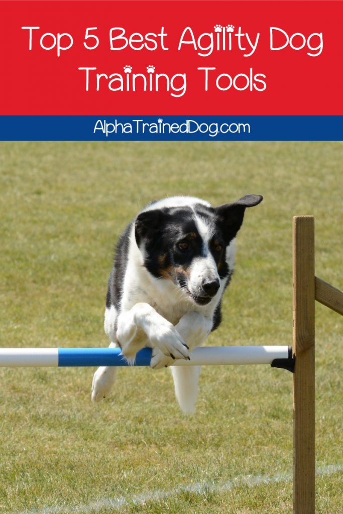 What are the best agility training tools for dogs? Read on to discover our top five favorite tools to use in your coursework!