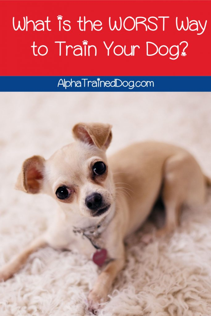 What is the worst way to train a dog? The simple answer: anything that uses pain or fear. Read on to find out why they're so damaging to your dog!