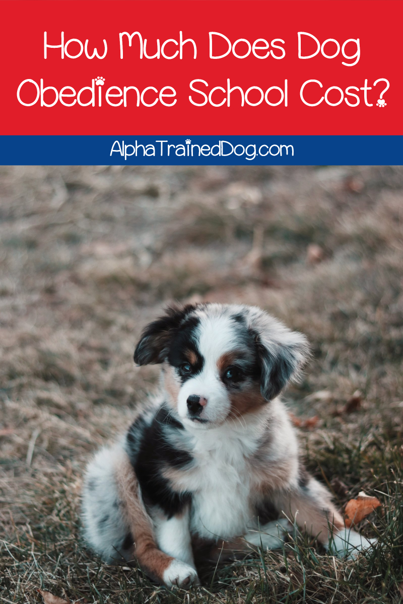 How Much Does Dog Obedience School Cost Alpha Trained Dog