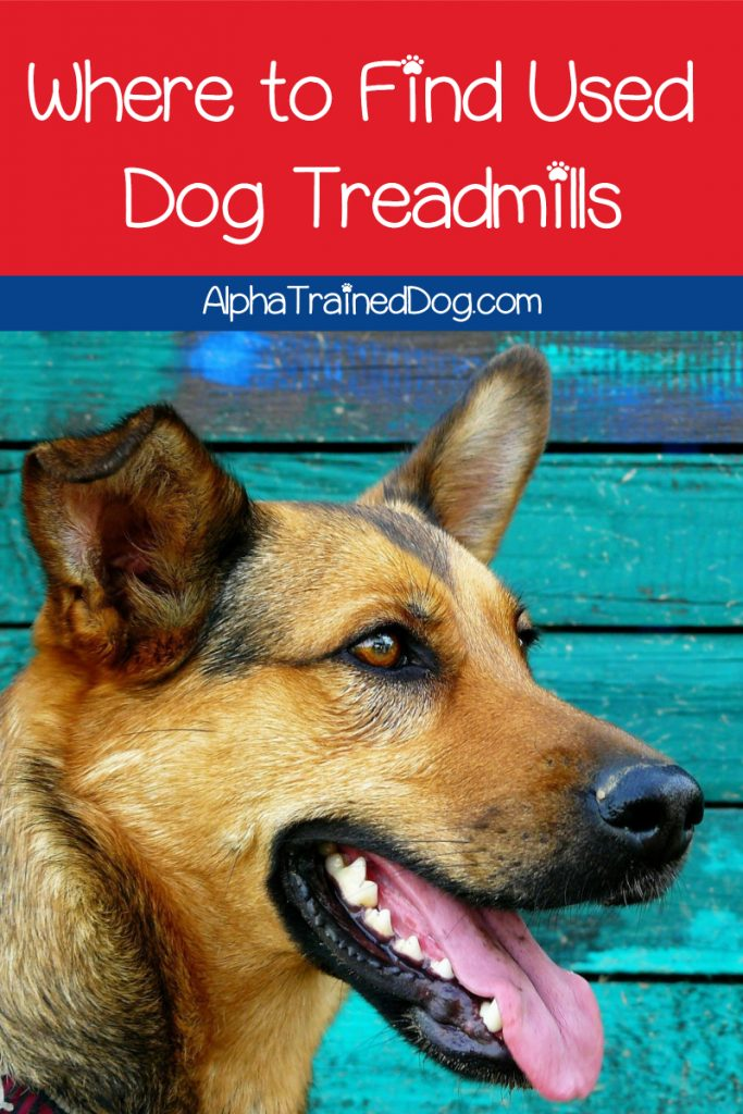 Looking for the best places to find dog treadmills used? Read on for our top five ideas, plus find out why you'd want to consider used in the first place!