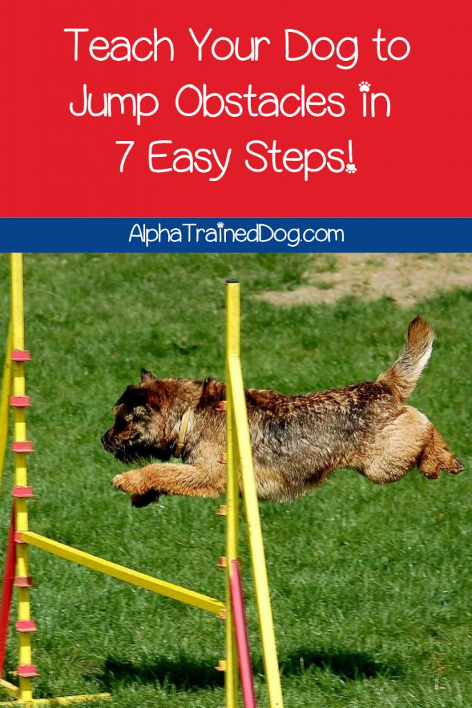 Learning how to teach your dog to jump over hurdles is surprisingly easy when you follow our 7-step guide. Check it out now!