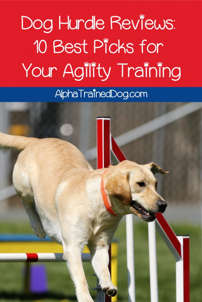 If you're planning on doing agility training with your pup, you'll want to check out my dog hurdle reviews! Take a look!