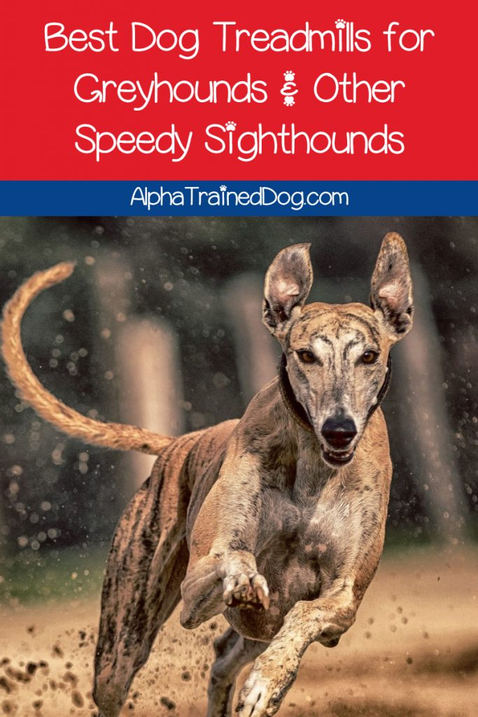 If you're struggling to find the best dog treadmills for greyhounds and other speedy sighthounds, let me help you out! Read on for the top 3 picks that are worth the investment!