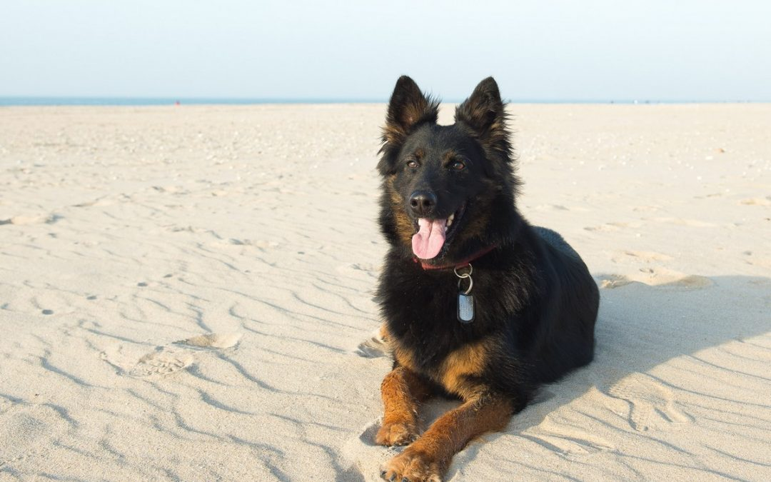 What is the Best Size Crate for a German Shepherd Puppy?