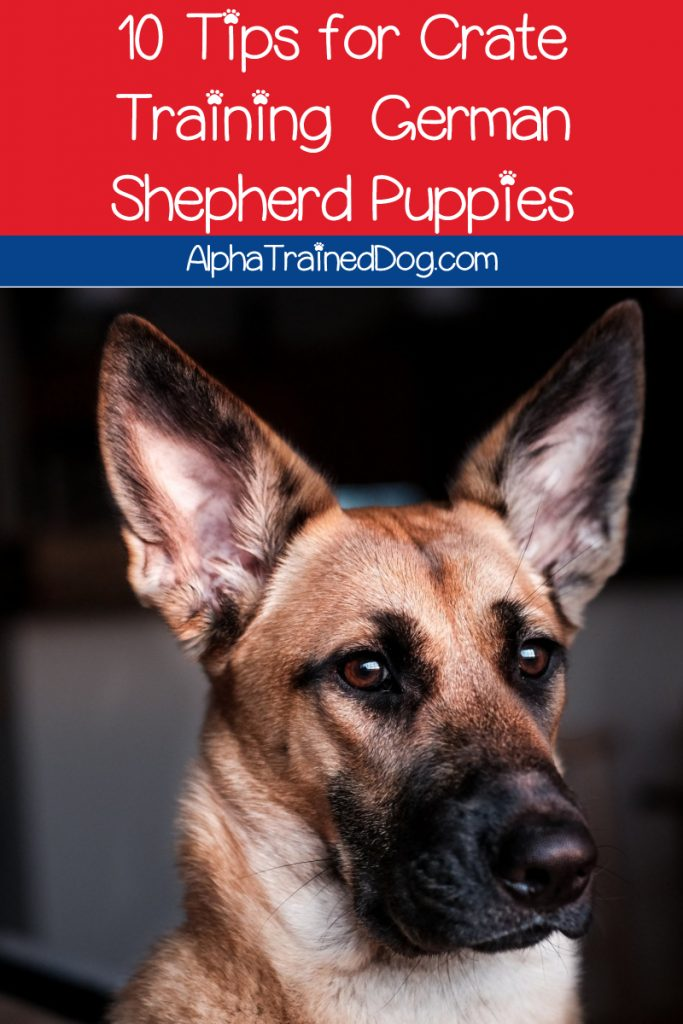 Want to learn how to crate train a German Shepherd puppy? We've got you covered! Check out 10 tips to make it easier on both of you!