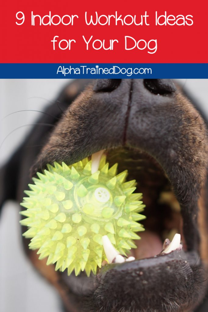 Are you looking for tips on how to exercise your dog indoors? Well, we've got 9 great ideas for you! We even included videos! Check it out!