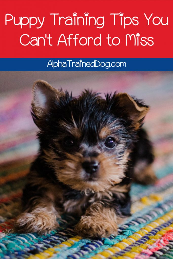 If you're looking for the most important puppy training tips to get you started, we've got you covered! Check out 7 things to know before you start.
