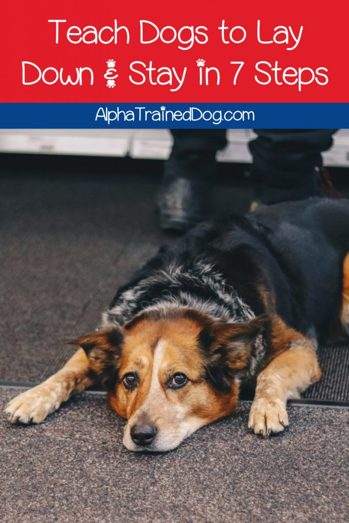 Want to learn to teach your dog to lay down and stay? It's not as hard as you might think! Check out our training tips for these vital commands.