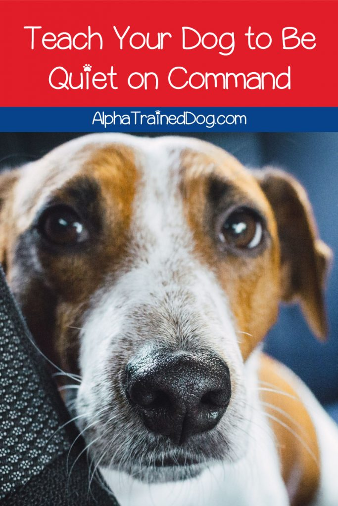 How do you teach your dog the quiet command? If you're wondering the same thing, read on for tips to train your dog to stop barking on command!
