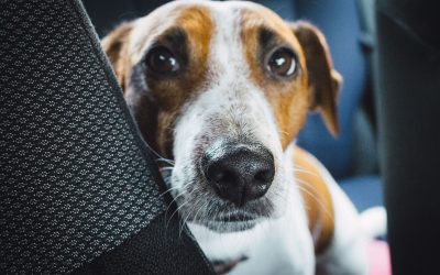 How Do You Teach Your Dog the Quiet Command?