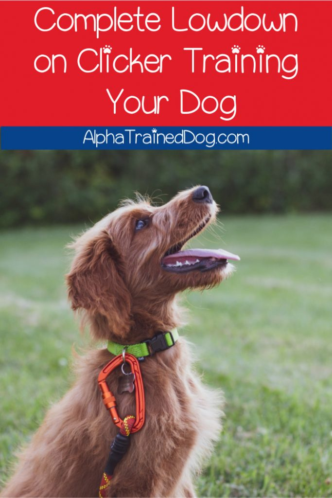 If you're new to dog clicker training, get ready for the complete lowdown on this popular positive reinforcement method!