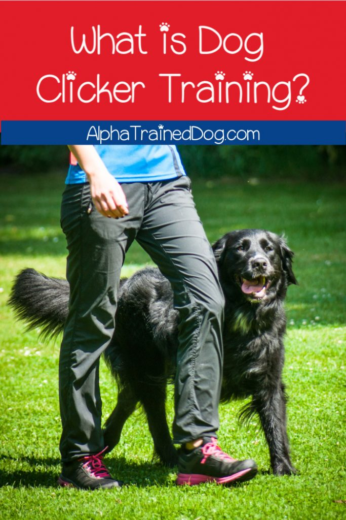 What is dog clicker training and how does it work? Check out the complete lowdown!
