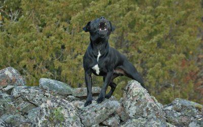Best Humane Dog Training Tools for Barking