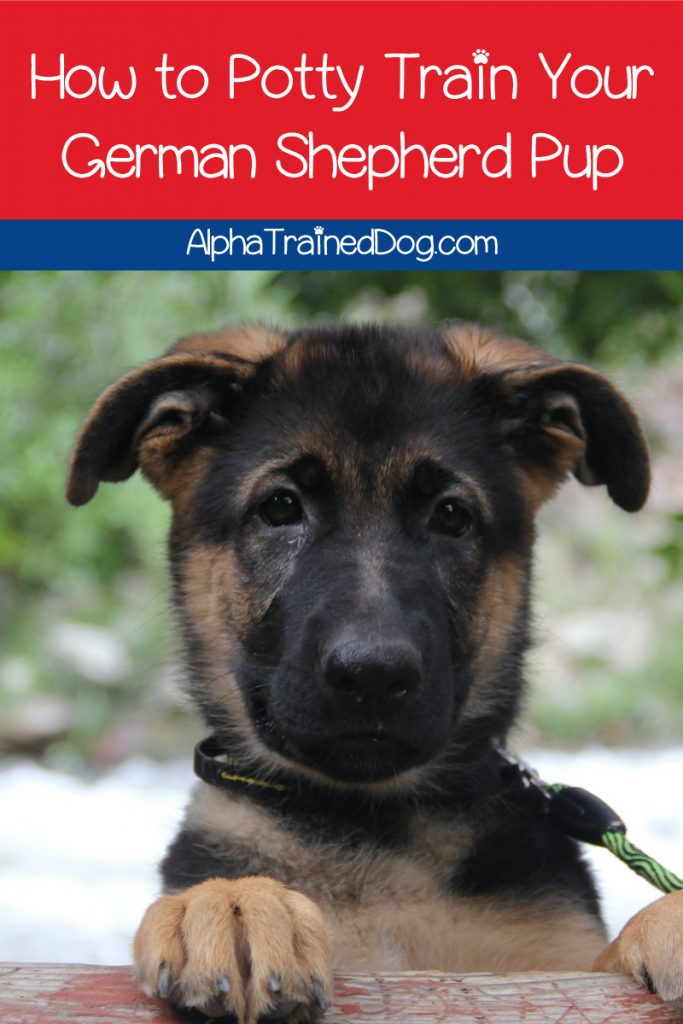 Are you looking for tips on house training a German Shepherd puppy? Check out 10 tips that will make the whole process easier on both of you!