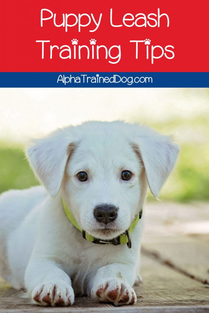 Do you need puppy leash training tips on how to teach your dog to walk nicely without dragging you all over the place? We've got you covered! Check it out!