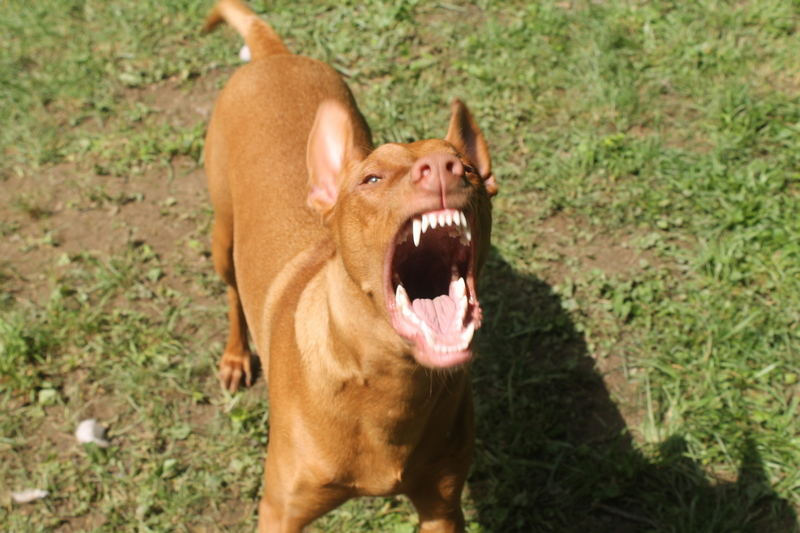 What is considered excessive dog barking?