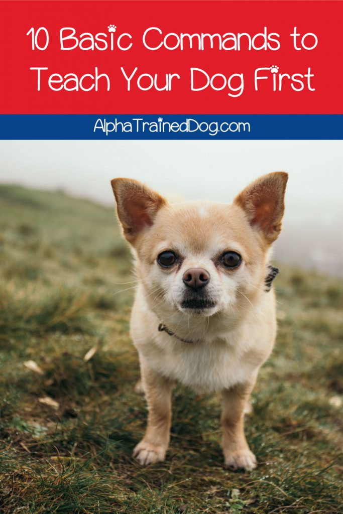 Wondering what you should train your dog to do? Check out the basic commands all well-behaved dogs know, plus some ideas for advanced trick training!