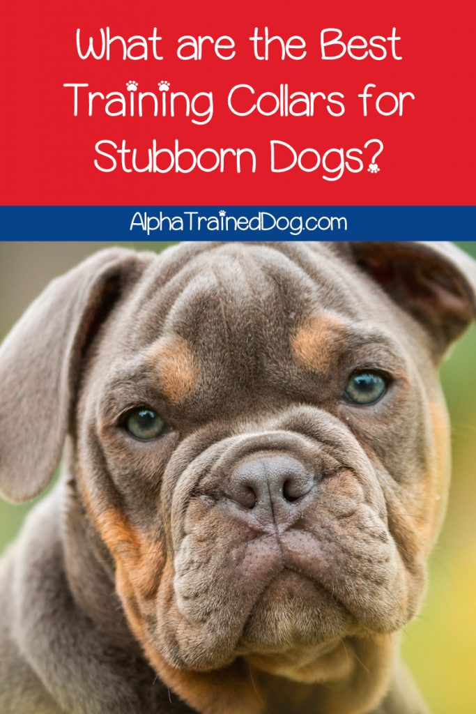 What are the best training collars for stubborn dogs? How about the most humane? Read on to find out the answer!