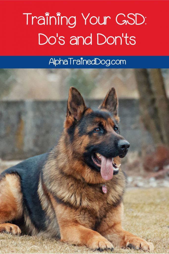 If you're looking for tips on training your GSD dog, we've got you covered.  Read on for the do's and don'ts of a successful German Shepherd training strategy.