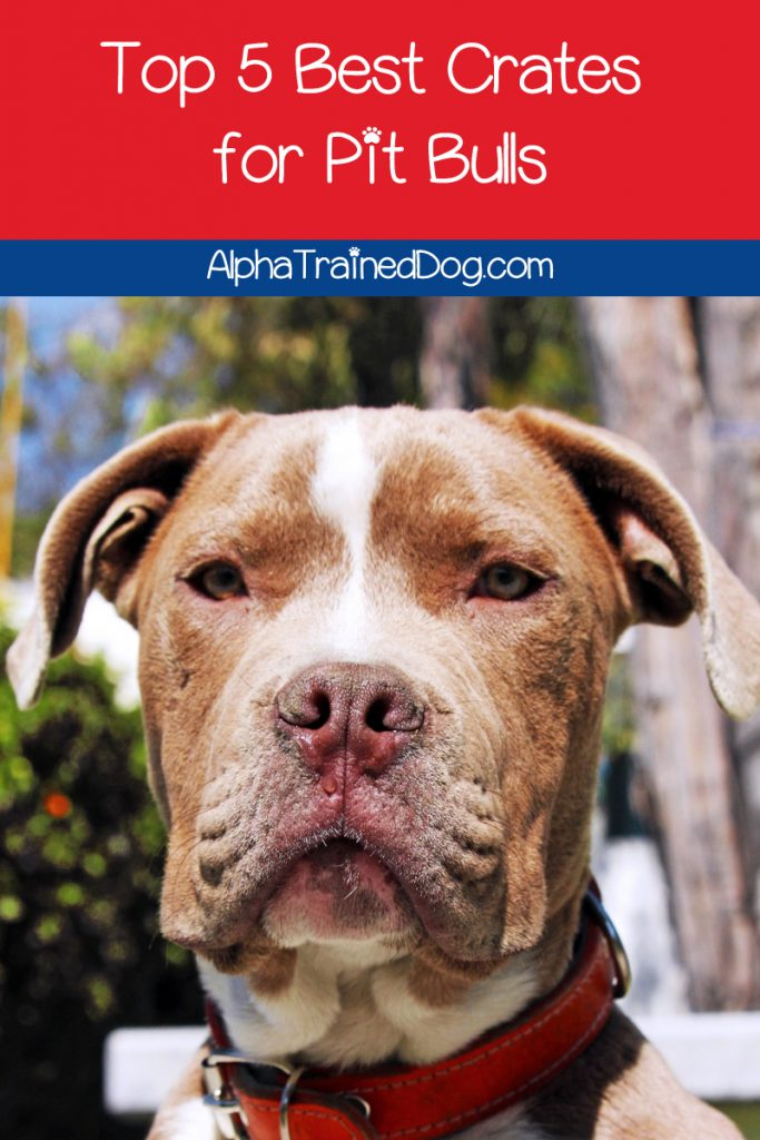 What are the best crates for pit bulls? What size should I get? Do I need an indestructible crate? Read on for the answers + check out our top 5 picks!