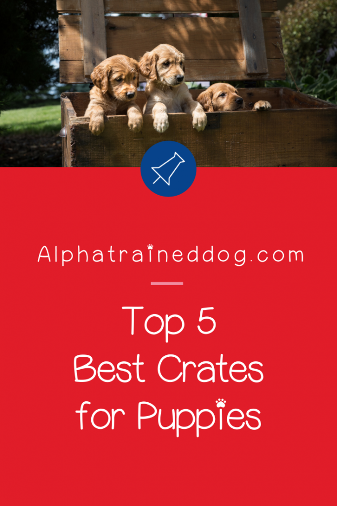 Today we're going to dive into the best crates for puppy training! Check out our top five favorites (including crates for separation anxiety),