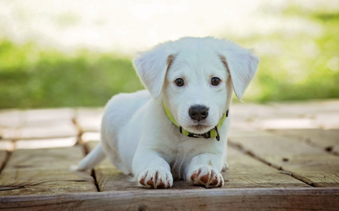 Top 5 Best Crates for Puppy Training
